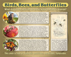 Birds Bees and Butterflies Interpretive