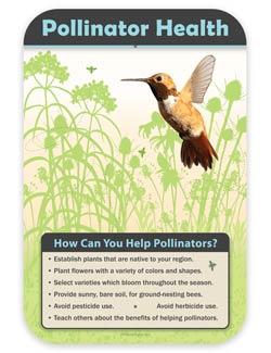 pollinator habitat wildlife